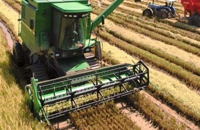 arroz-colheita-web