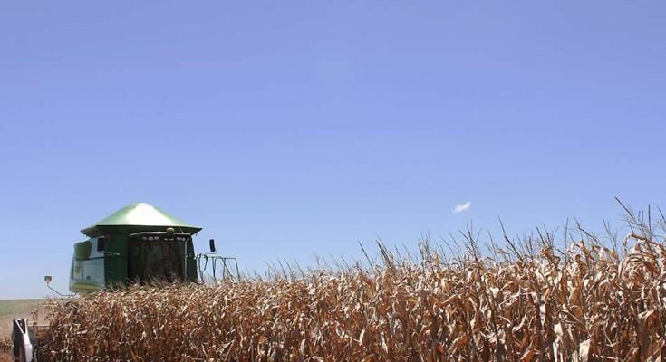 milho-colheita-web