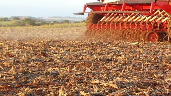plantio trigo