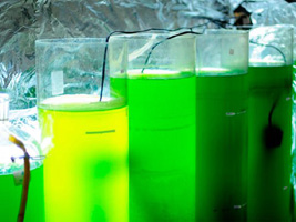 00Microalgas_dejetos_biodiesel