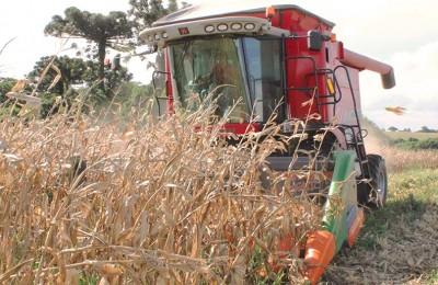 milho-colheita-4