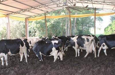 vaca-leite-web-2