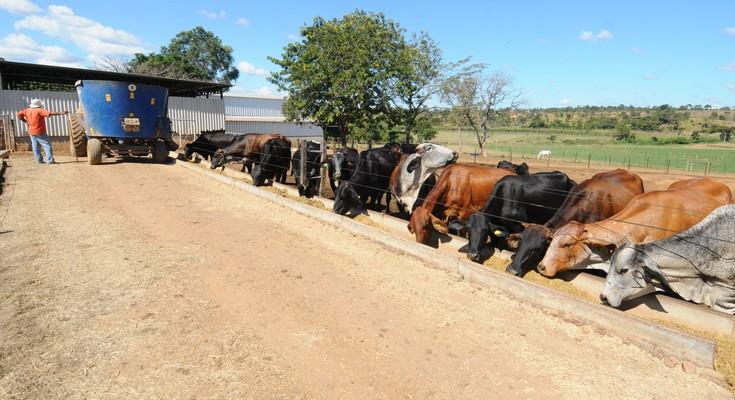 Agropecuaria / Proprietario de fazenda desenvolve aplicativo para administrar a atividade leiteira
