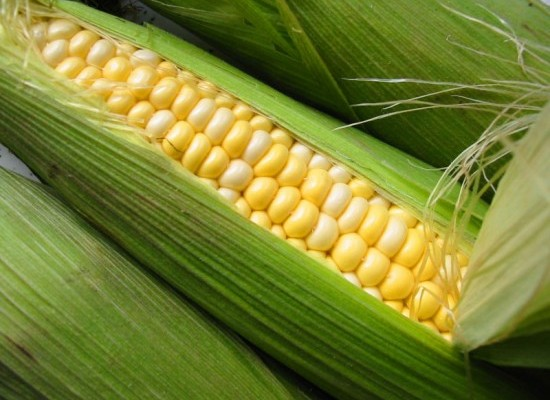 milho-verde-2-550x412