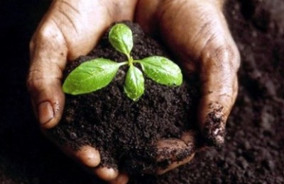 fertilidade-do-solo-como-mudar-12