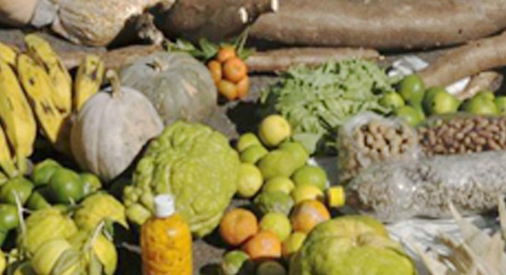 00ALIMENTOS_agricultura_FAM