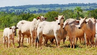 bovinos-genetica-aditiva-dia-de-campo-full