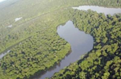 amazonia-web