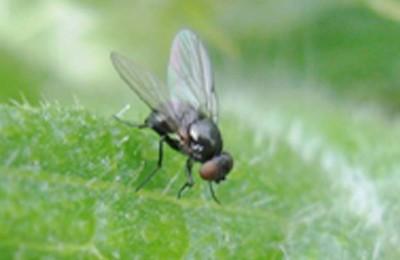 mosca-web
