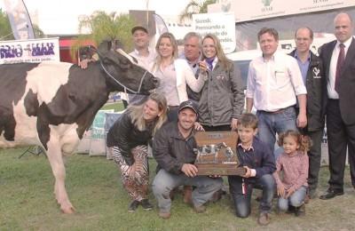 vaca-holandesa-campeã-Expointer-web