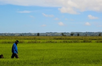 arroz org