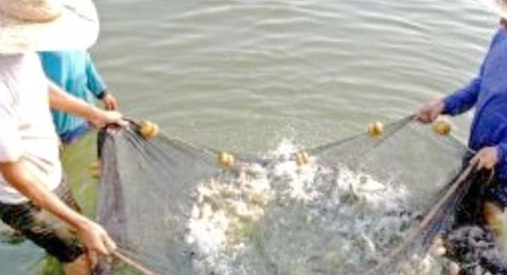 peixe-webbb