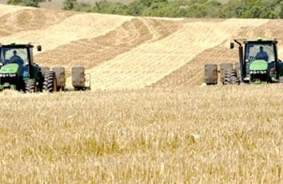 colheita-trigo-web