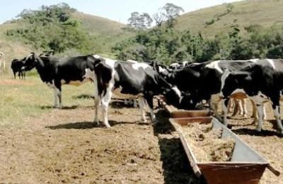 vacas-leite-web