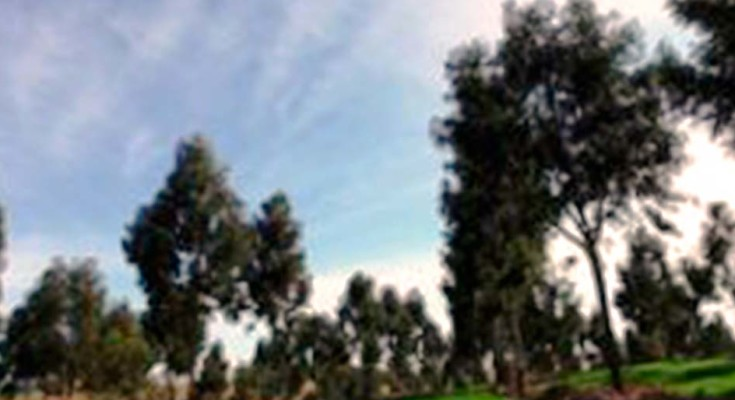 foto-lavoura-pecuária-e-floresta-web