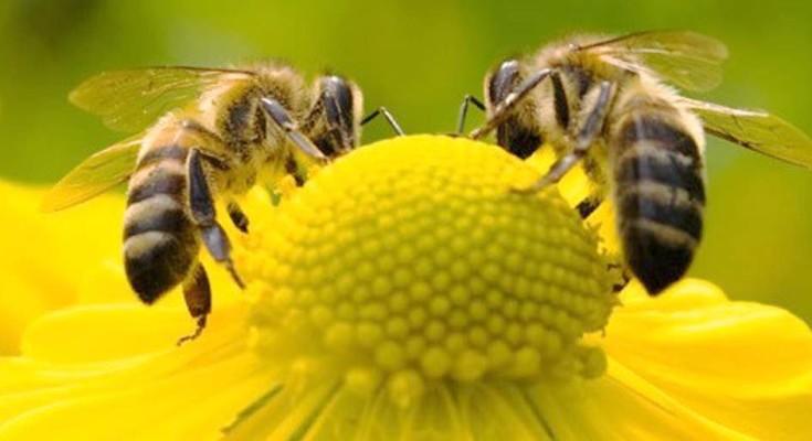 abelha-webbb