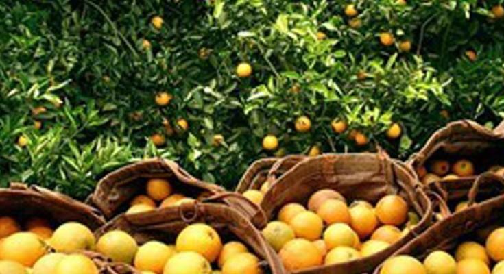 laranja-web
