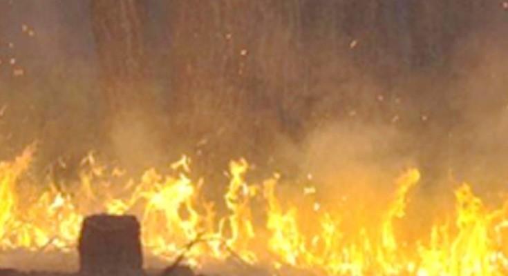 queimadas-web