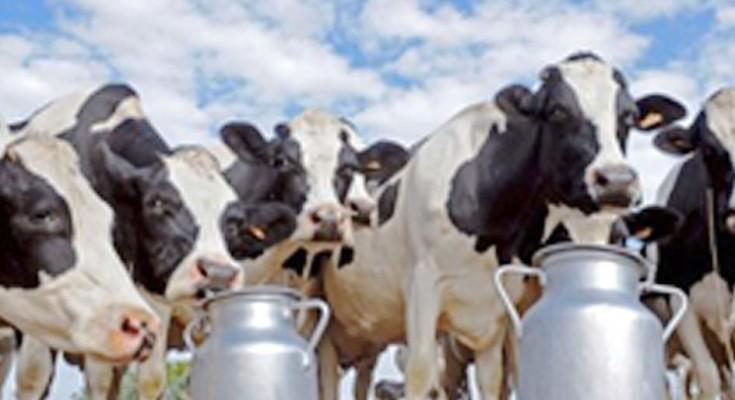 leite-triplicar-web