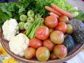 producao-de-alimentos