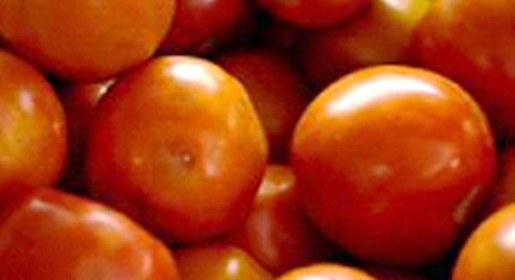 tomate-webbb