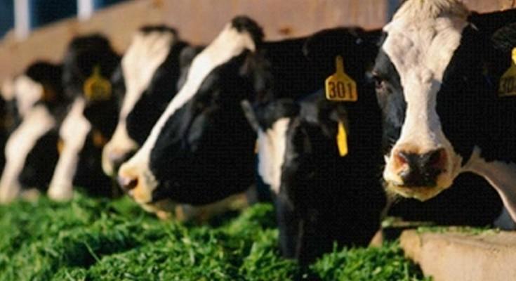 vacas-pasto-web
