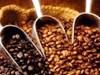 café-robusta-web
