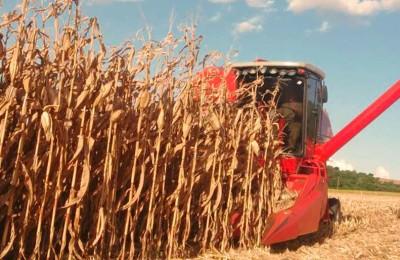 colheita-milho-Não-Me-Toque