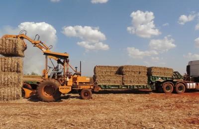 Usina de Biomassa