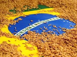 Arroz brasileiro
