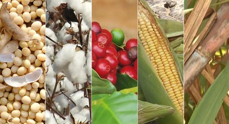 culturas-agro-safra