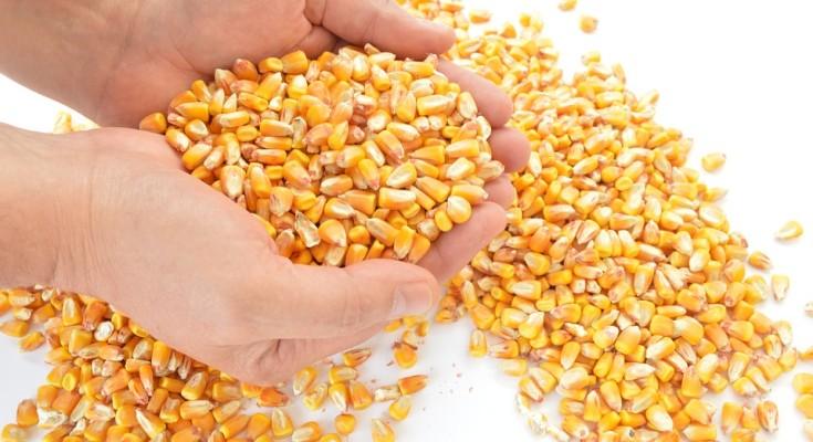 Produção no Agro