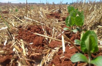 Soja e Herbicida Verde