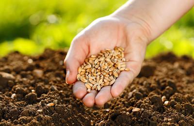 1-biomassa-vegetal-e-animal