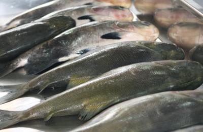 Exportação de Peixe